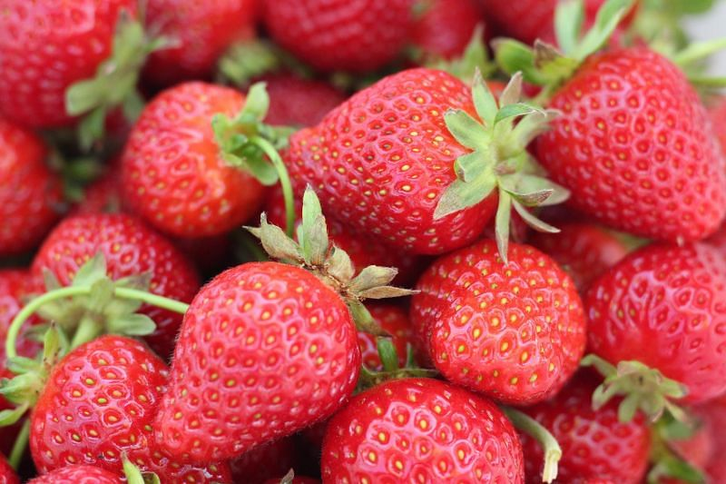 Berries contain low quantities of carbohydrates