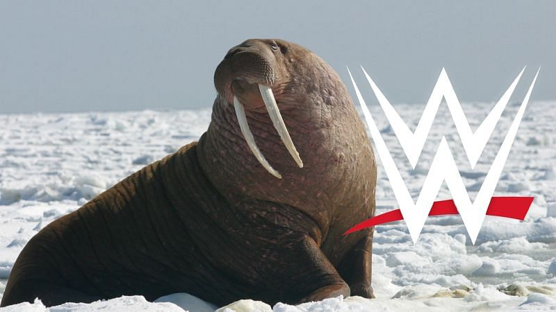 WWE has filed to trademark a strange new term