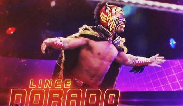 What is Lince Dorado hinting at?
