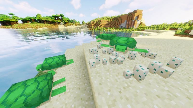 How to Get Scutes in Minecraft