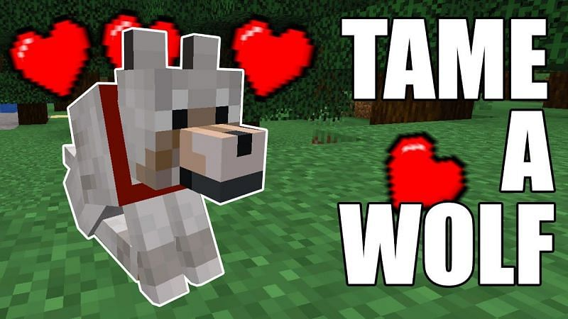A comprehensive Minecraft guide on how to tame a wolf. (Image via EKGaming/YouTube)