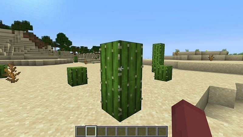 Once you found cactus break it