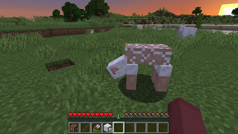 If there are other sheep in the area, you can shear those sheep too