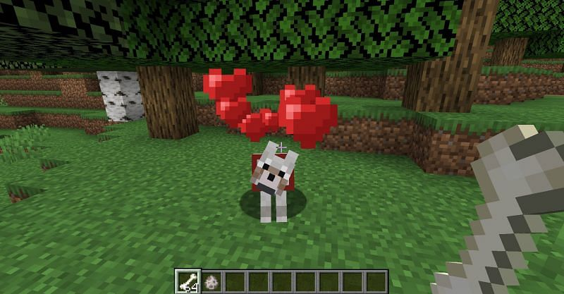 Successfully taming a wolf in Minecraft. (Image via Minecraft)