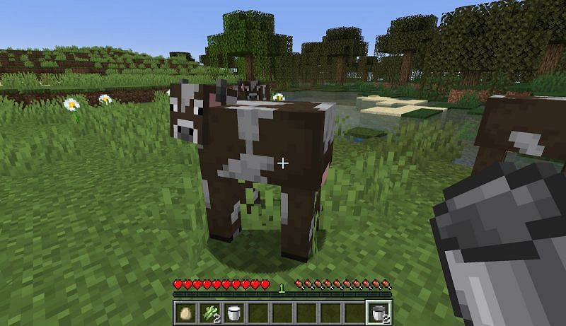 find a cow in your world