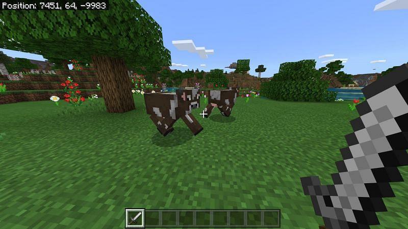 Minecraft cows