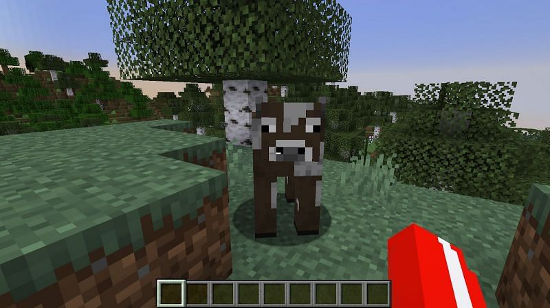 Cows can be find in any biome