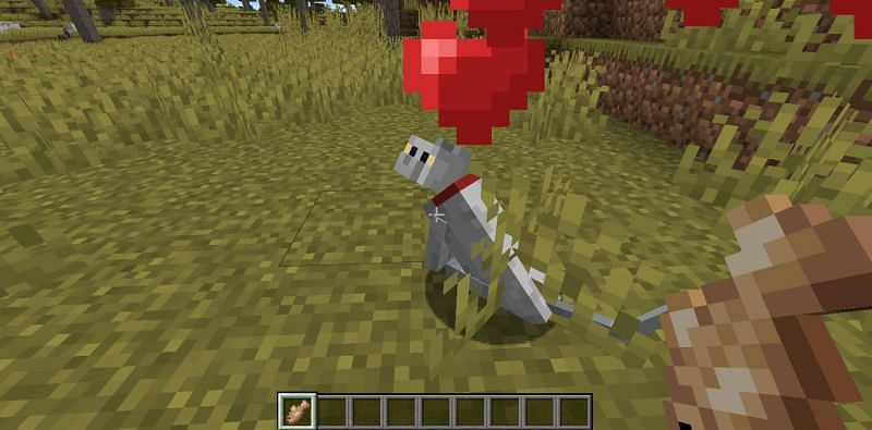 Taming a stray cat in Minecraft. (Image via Minecraft)