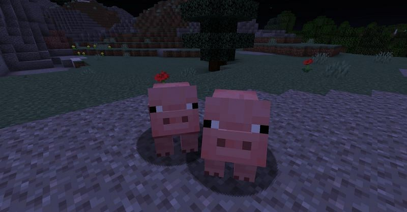 Two pigs in Minecraft (Image via Minecraft)