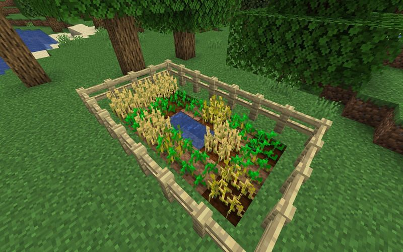 Wheat in Minecraft can be found in farms (Image via Minecraft)
