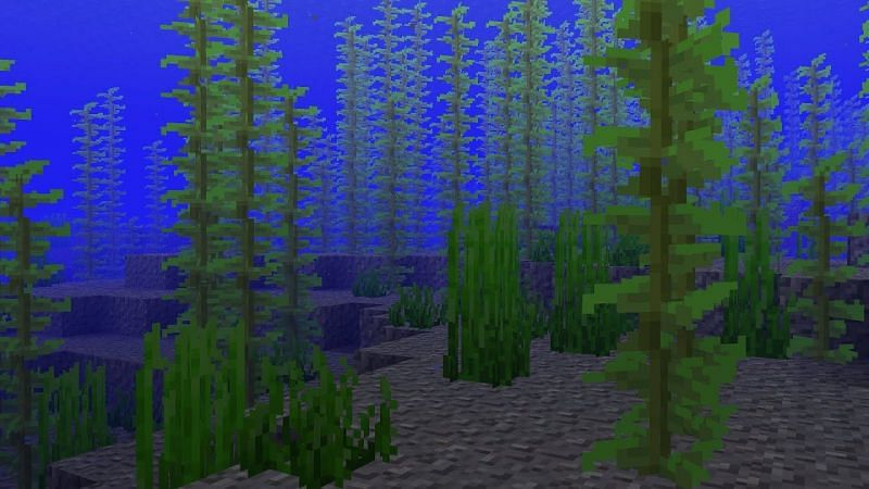 Kelp is found in one of its natural habitats in Minecraft. (Image via ThisIsMystic/YouTube)