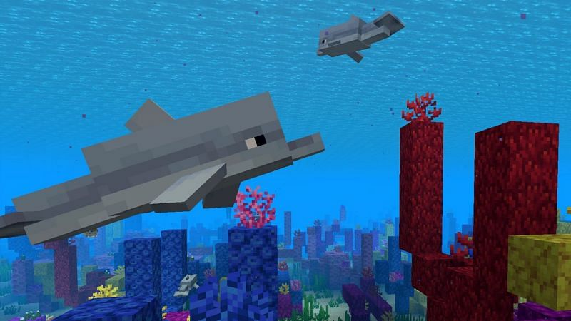 Dolphins swimming near a coral reef in Minecraft. (Image via Minecraft.net)