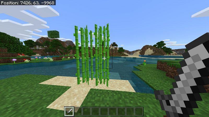Suagrcane in Minecraft