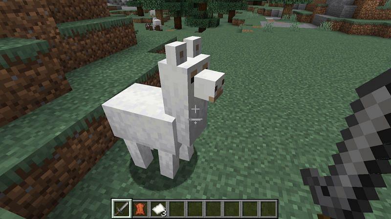 Llamas spawn mainly in taiga biomes