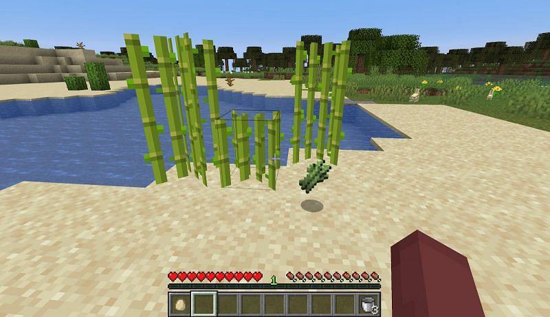 Sugar cane grows near water