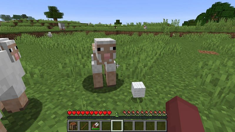 Right-click the sheep with the shears to collect the sheep's wool