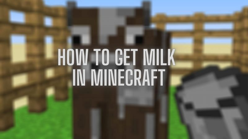 A guide detailing how to obtain milk within Minecraft and its uses