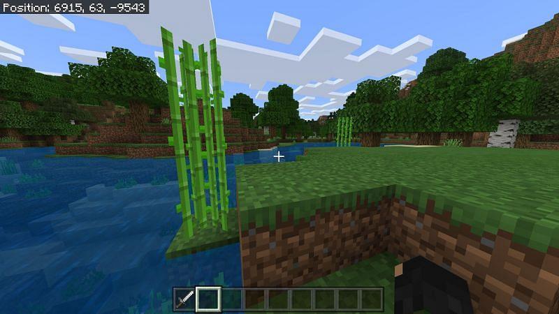 Sugarcane in Minecraft