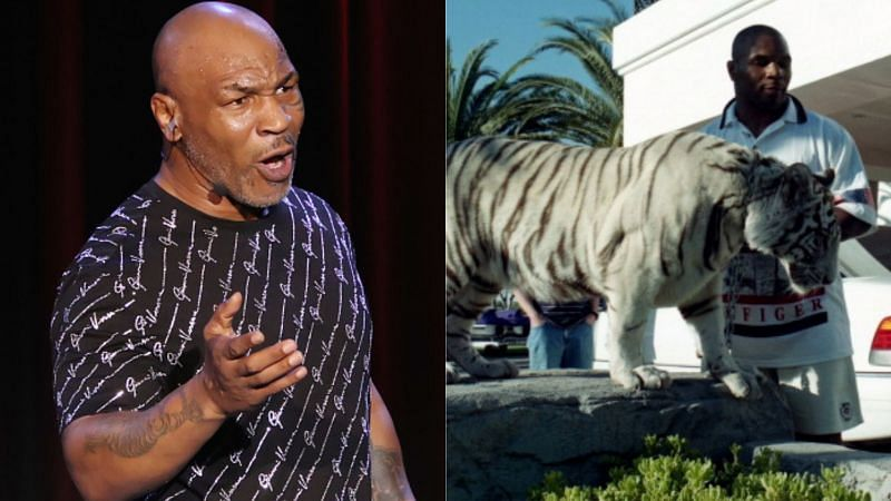Mike Tyson used to own a White Bengal Tiger named Kenya