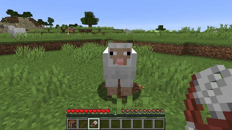 Find a sheep
