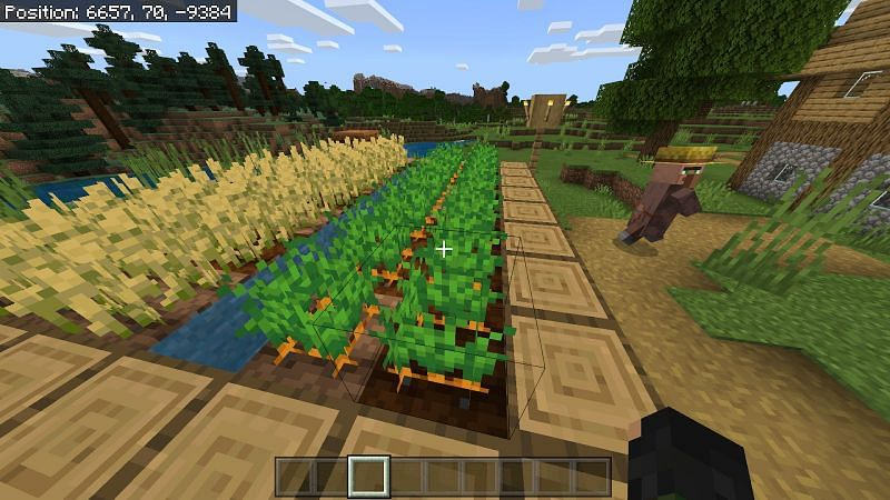 Carrots in Minecraft