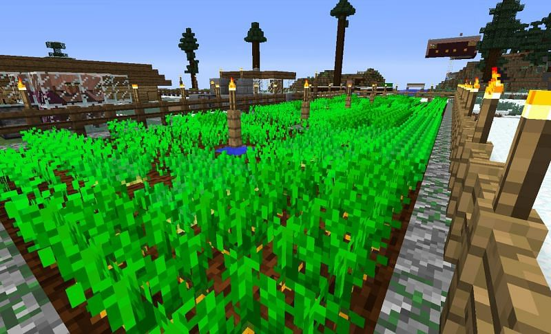 Potatoes and carrots crops in Minecraft (Image via gearcraft.us)