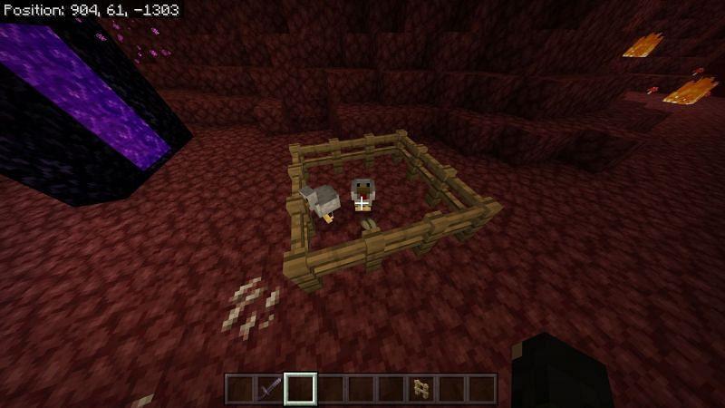 minecraft chickens in nether