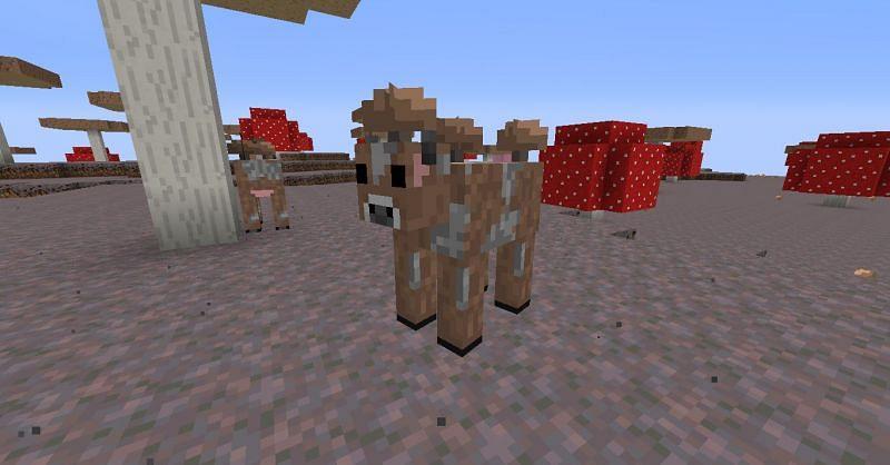 Brown mooshroom (Image via Minecraft)