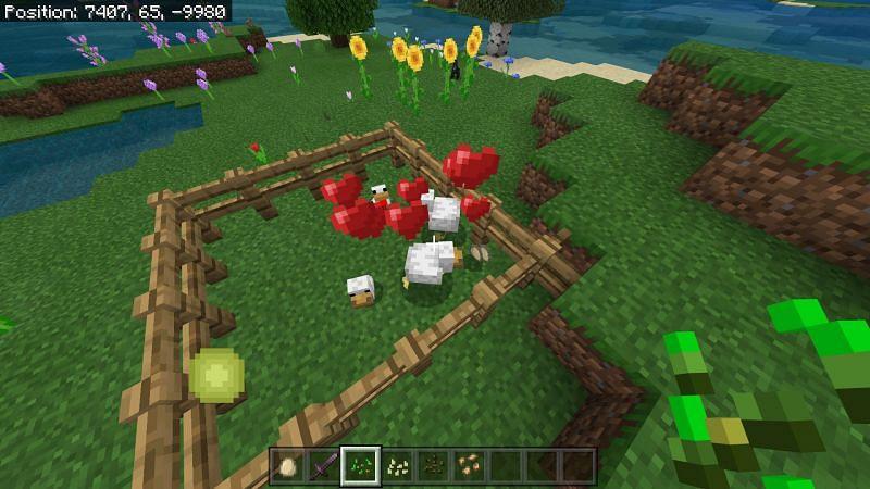 minecraft chickens breeding