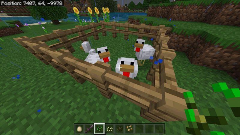minecraft chicken
