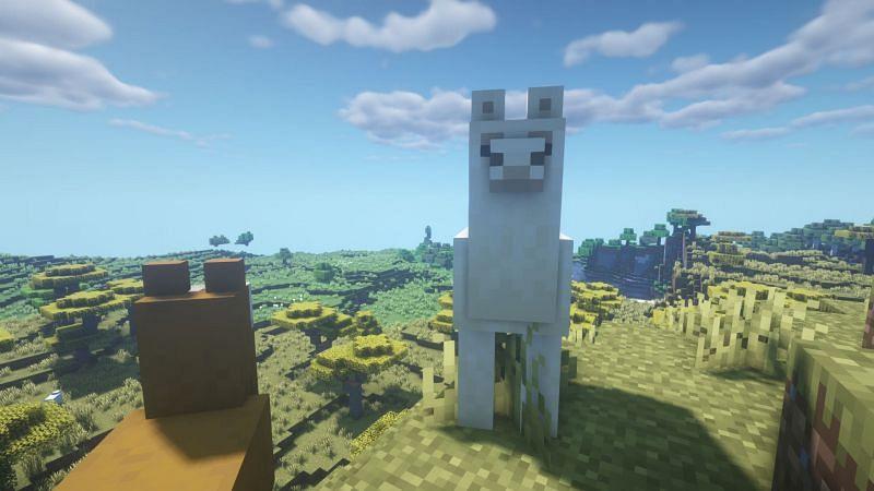 Llamas at dawn (Image via Minecraft)