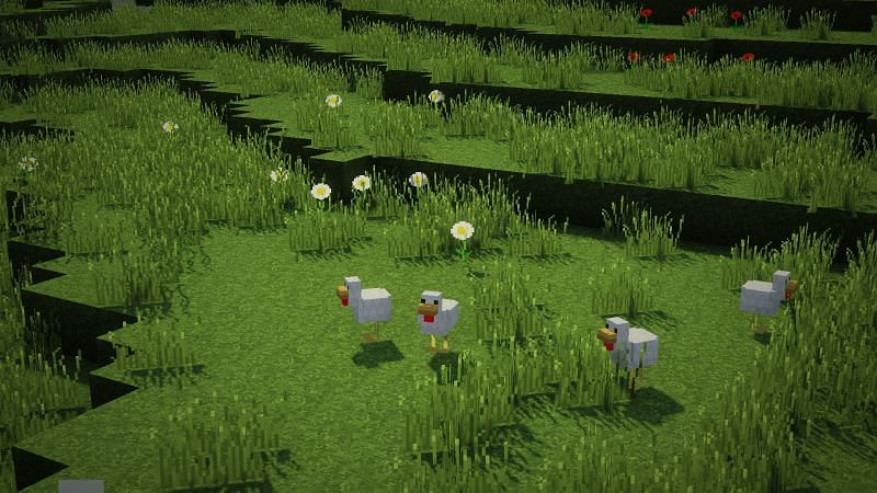 Chickens wandering in a field in Minecraft (Image via wallpapercave.com)