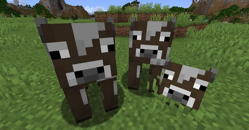 Two cows and a calf in Minecraft. (Image via Minecraft)