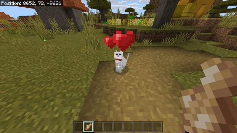 Minecraft Cat with hearts collar