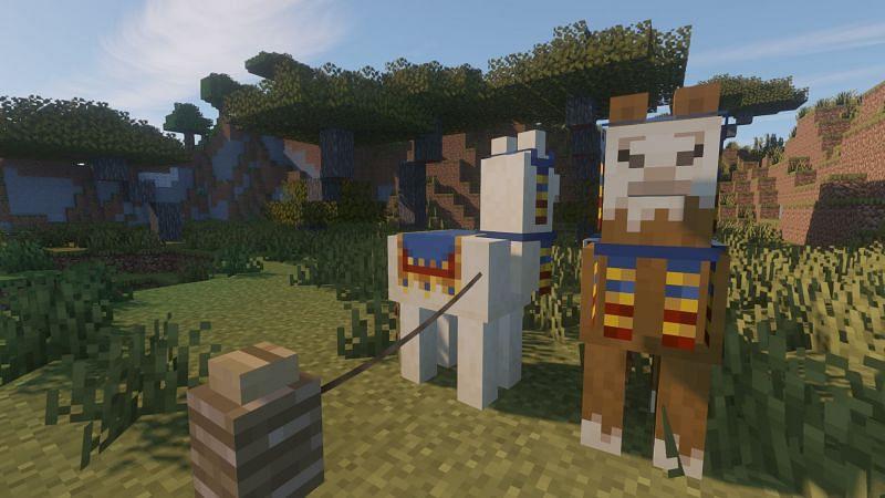 A Llama tied to a Fence post (Image via Minecraft)