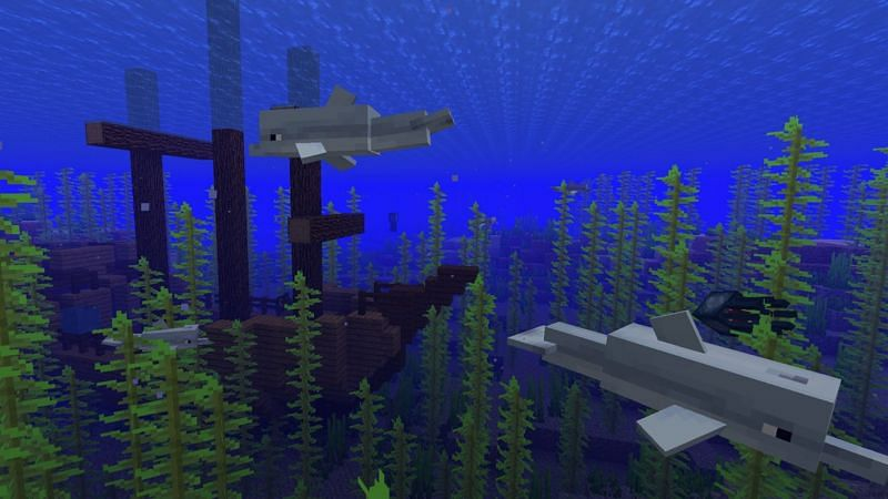 Dolphins swimming near a shipwreck in Minecraft. (Image via Minecraft.net)