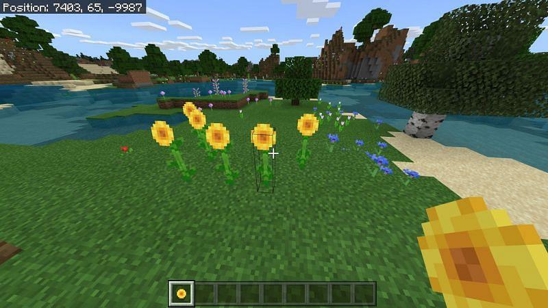 Sunflowers in Minecraft