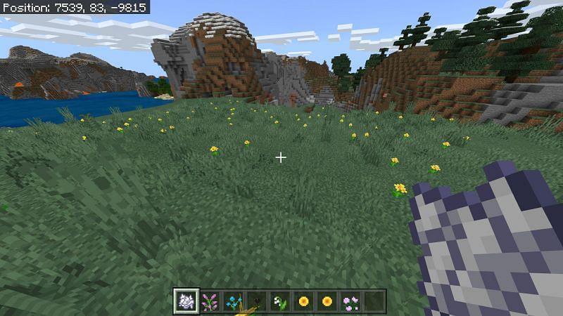Flower field in Minecraft