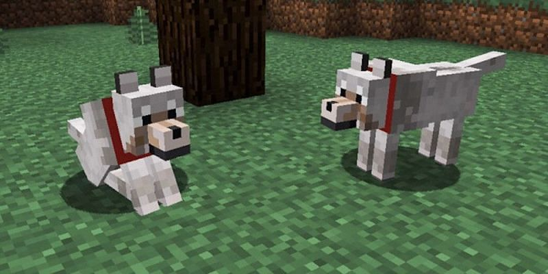 Wolves (Image via Minecraft)