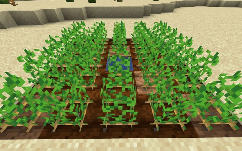 There are different types of potatoes in Minecraft (Image via Minecraft)