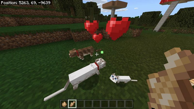 Breeding Cats in Minecraft