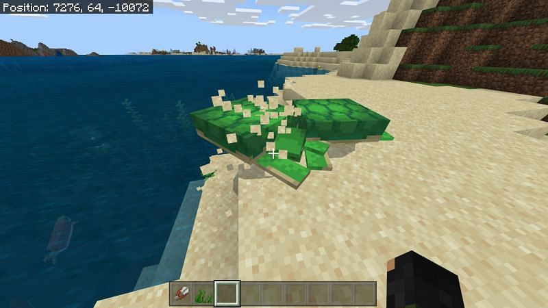 Minecraft turtles laying eggs