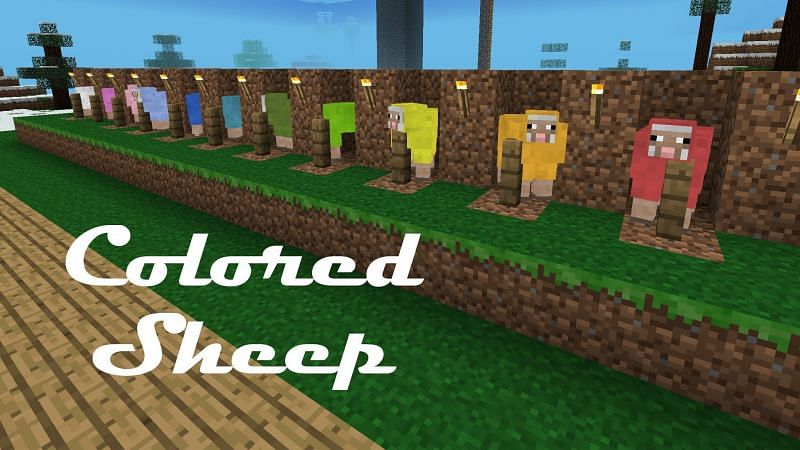 Color coding sheep (Image via pinterest)