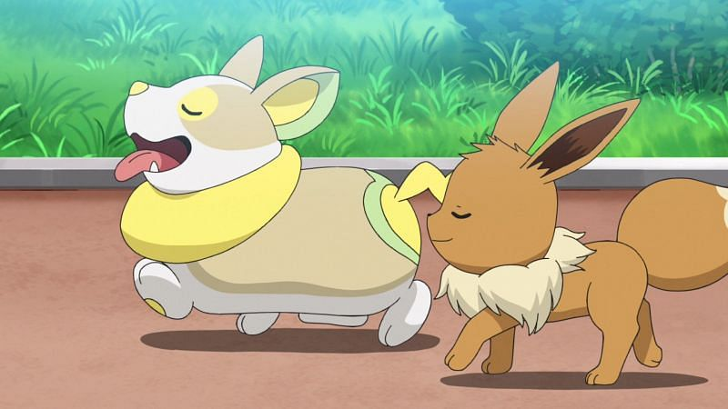 Yamper and Eevee (Image via The Pokemon Company)