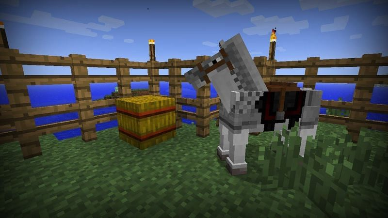 Hay bale next to the horse (Image via YouTube)