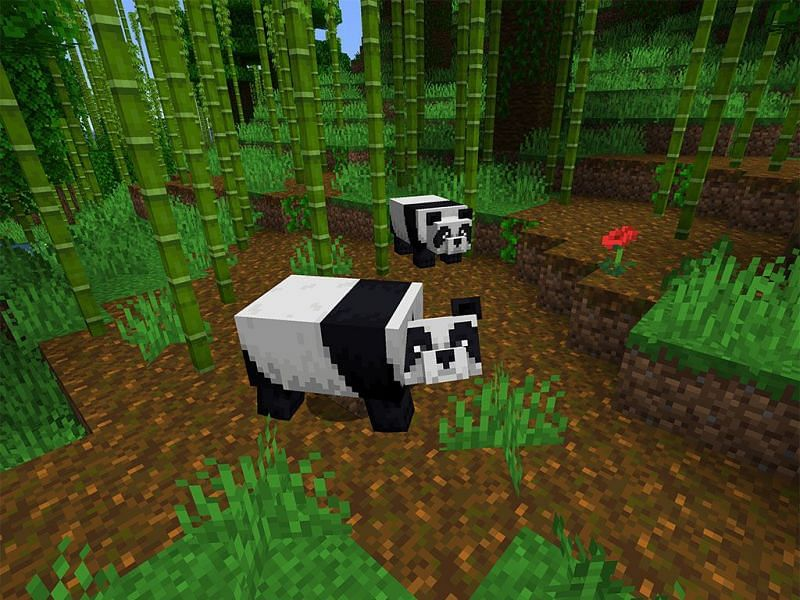 Minecraft pandas near bamboo (Image via the mine.guide)