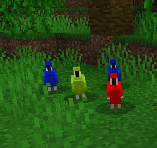 You can find them on logs, leaves or grass blocks within the jungle biome.