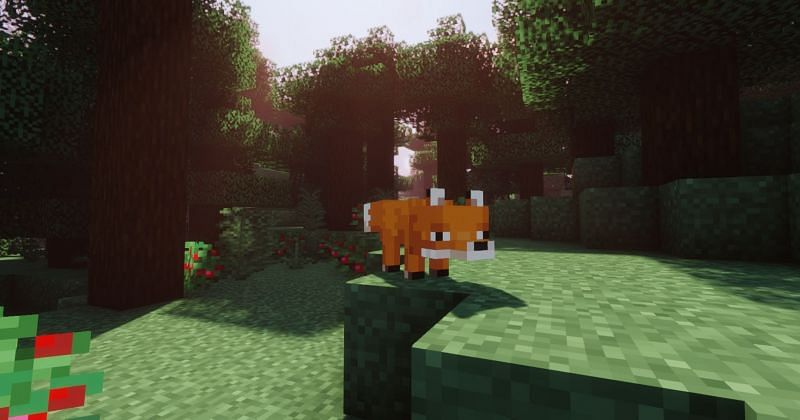 A cute fox looking for some berries to snack upon (Image via Minecraft)