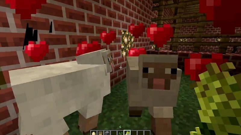 Breeding Minecraft sheep (Image via YouTube)