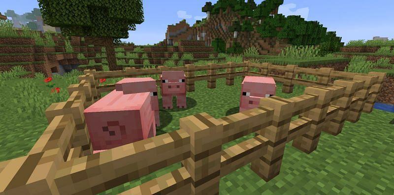 Little piggies in a farm (Image via Minecraft)